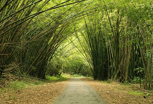 Bamboo Cathedral in Chaguaramas in Western Trinidad