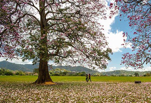 Visit Queen's Park Savannah in Port of Spain Trinidad